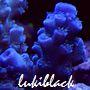 lukiblack