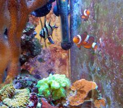 korals (2)
