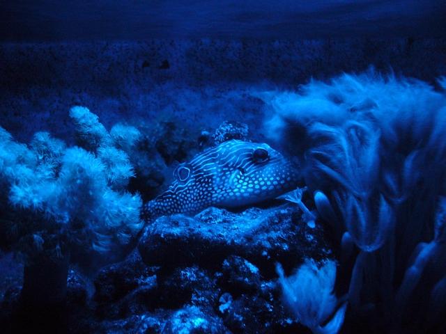 Oświetlenie Nocne Ogólny Nano Reefpl