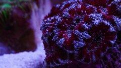 acana_red_silver_DSC01573.jpg