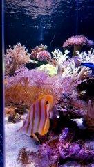 Purple Reef