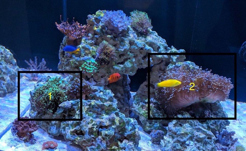koralowce_przed.thumb.jpg.e09f9525d2329213afe28cc669deb771.jpg