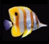 Nemo7